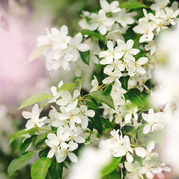 Wiosenne Kwiaty W Ogrodzie Z Bliska Premium Zdjęcia