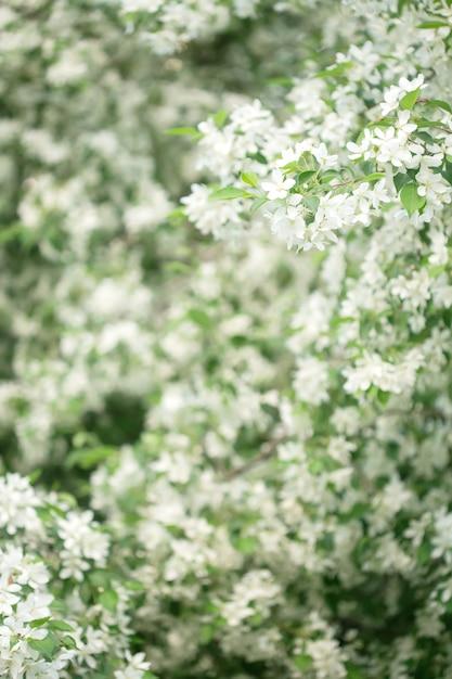 Wiosenne Kwiaty W Ogrodzie Premium Zdjęcia