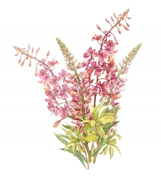 Wiosenne kwiaty willow-nerb i wilczy drzewo na białym tle. akwarela ilustracja. Premium Zdjęcia