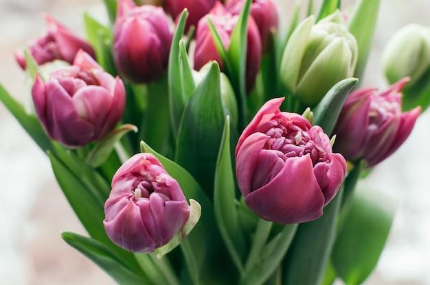 Wiosenne Różowe Kwiaty Premium Zdjęcia