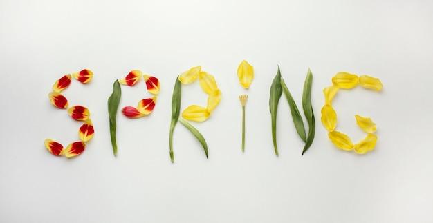 Wiosenne Słowo Płatków Kwiatów Darmowe Zdjęcia