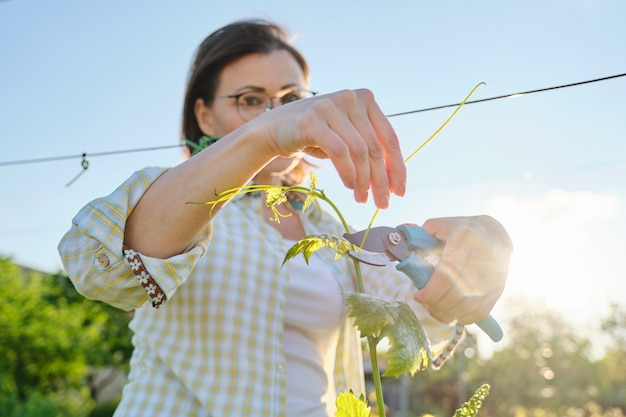 Wiosna Plenerowy Portret Pracuje W Winnicy Kobieta Premium Zdjęcia