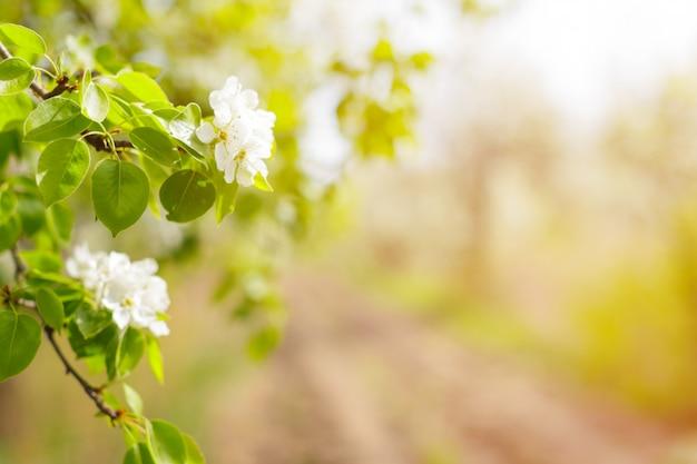 Wiśniowe kwiaty na niewyraźne charakter Premium Zdjęcia