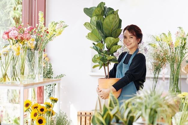 Właściciel Kwiaciarni Posiadający Fikus Premium Zdjęcia