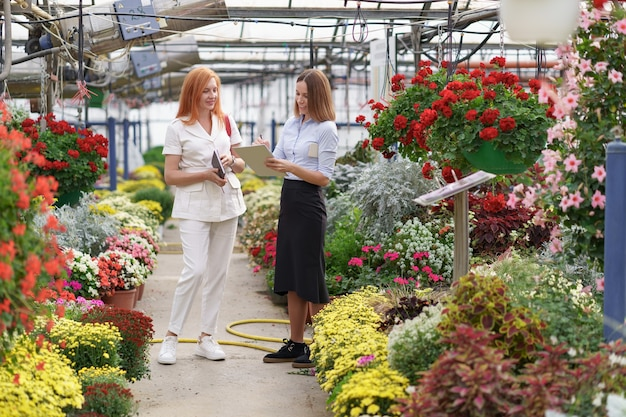 Właściciel Szklarni Przedstawia Opcje Kwiatów Potencjalnemu Sprzedawcy Detalicznemu. Darmowe Zdjęcia