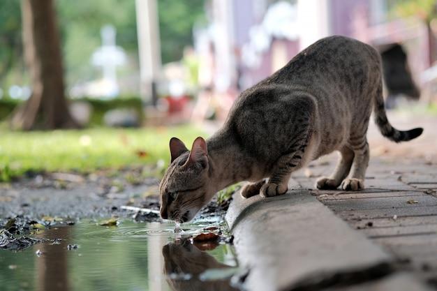 Woda Pitna Dla Kota Z Kałuży Na Ulicy Premium Zdjęcia