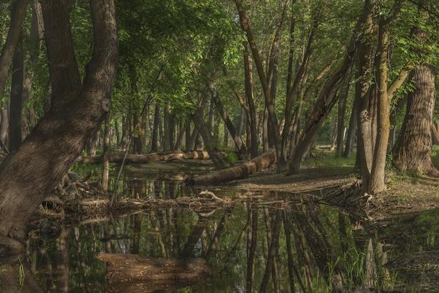 Woda W środku Lasu Otoczona Zielonymi Liśćmi Drzew W Ciągu Dnia Darmowe Zdjęcia