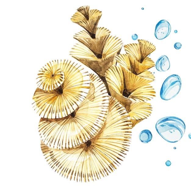 Wodorosty życia morskiego przedmiot odizolowywający na białym tle. akwarele ręcznie malowane ilustracja. Premium Zdjęcia