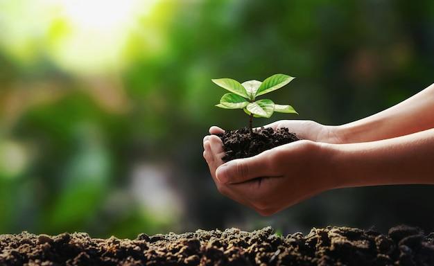 Wręcza Mieniu Młodego Drzewnego Flancowania W Ogrodowym Pojęciu Save świat Premium Zdjęcia