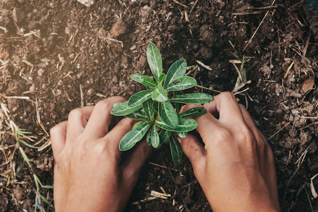Wręcza Sadzenia Drzewa W Ziemi Z Zmierzchem Przy Ogródem Premium Zdjęcia