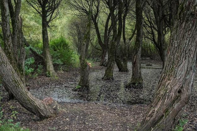 Wróżka straszny las Premium Zdjęcia