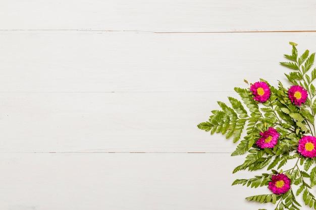 Wspaniałe Różowe Kwiaty I Zielone Liście Na Białej Powierzchni Darmowe Zdjęcia