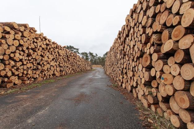 Wybór Drewnianych Pniaków Na Wsi Darmowe Zdjęcia