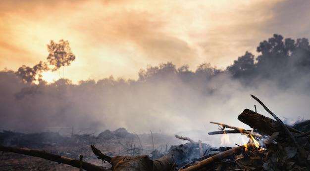 Wylesianie Lasów Deszczowych W Azji. Dym I Zanieczyszczenie Powietrza Z Płonących Pól Rolnych. Premium Zdjęcia