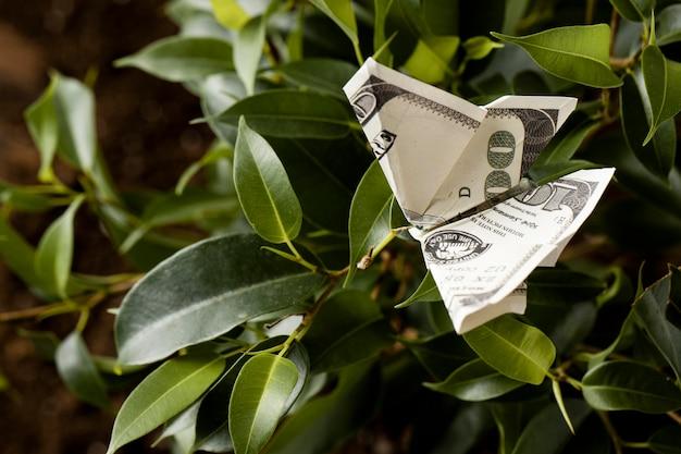 Wysoki Kąt Banknotu Na Roślinie Darmowe Zdjęcia