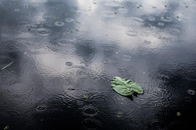 Wysoki Kąt Bliska Strzał Izolowanych Zielonych Liści W Kałuży W Deszczowy Dzień Darmowe Zdjęcia