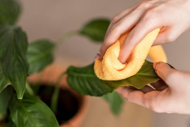 Wysoki Kąt Kobiety Cleaning Rośliny Liście Z Płótnem Darmowe Zdjęcia