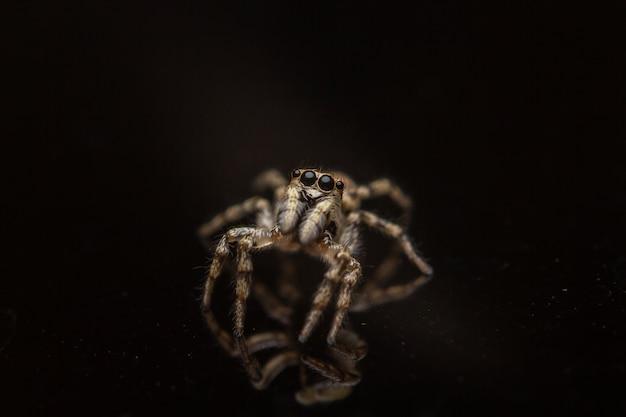 Wysoki Kąt Strzału Creepy Salticidae Na Czarnej Powierzchni Darmowe Zdjęcia