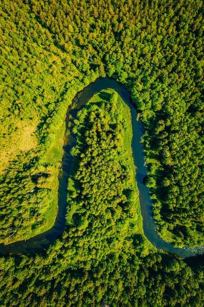 Wysoki Kąt Strzału Krzywego Jeziora W Lesie Otoczonym Dużą Ilością Wysokich Zielonych Drzew Darmowe Zdjęcia