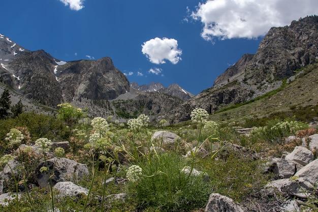 Wysoki Kąt Ujęcia Naturalnego Obszaru W Pobliżu Lodowca Palisades W Big Pine Lakes W Kalifornii Darmowe Zdjęcia