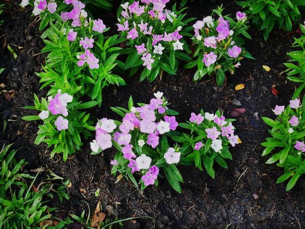 Wysoki Kąt Widzenia Różowe Białe Rośliny Kwitnące Na Tle Gleby Premium Zdjęcia