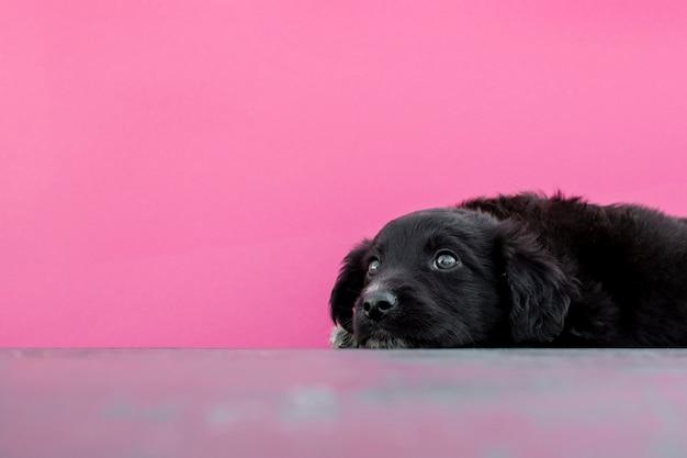 Wysokiego Kąta śliczny Psi Obsiadanie Na Podłoga Darmowe Zdjęcia