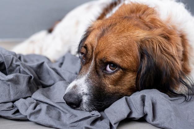 Wysokiego Kąta Smutny Psi Obsiadanie Na Podłoga Darmowe Zdjęcia