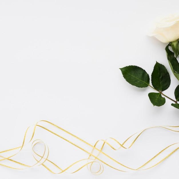 Wysokiego kąta widok biel róża i faborki na prostym tle Darmowe Zdjęcia