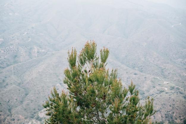Wysokiego kąta widok pinecone drzewo przed góra krajobrazem Darmowe Zdjęcia