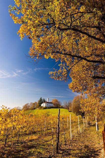 Wzgórza winnic jesienią Premium Zdjęcia
