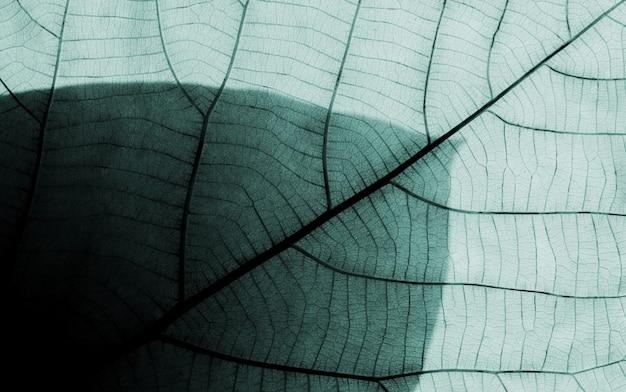 Wzory liści Premium Zdjęcia