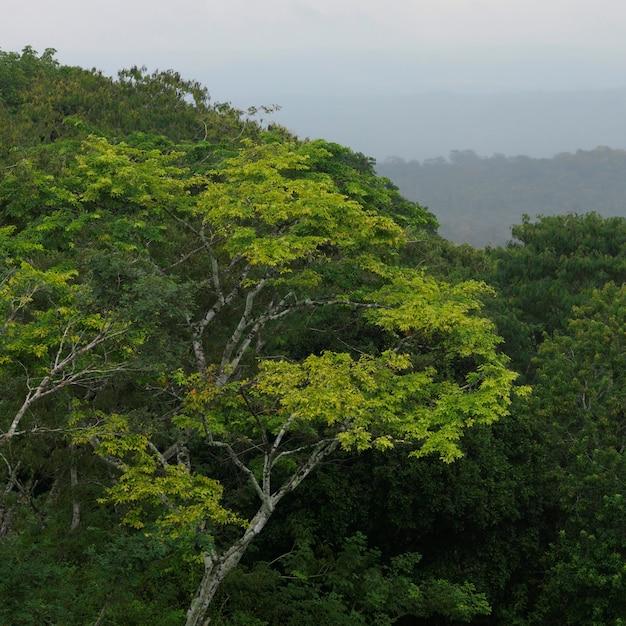 Xunantunich, jungle Premium Zdjęcia