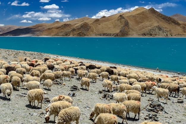 Yamdrok Yumtso Jezioro W Tybecie Premium Zdjęcia