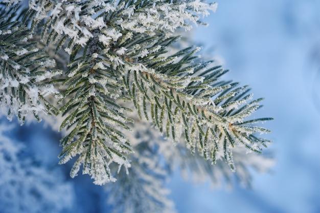 Z zaśnieżoną gałęzią sosny. świąteczna kartka z pozdrowieniami Premium Zdjęcia