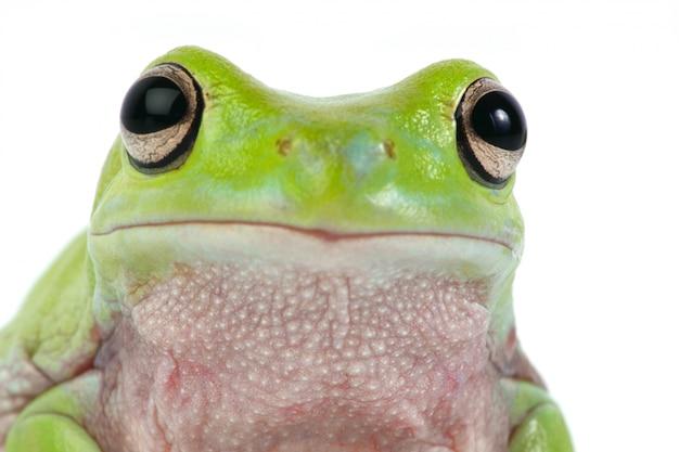 Żaba Z Bliska Darmowe Zdjęcia