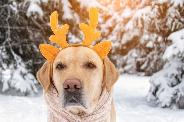Zabawny Pies W Rogach Jelenia Na Tle Zimy. Pies Noel. Premium Zdjęcia