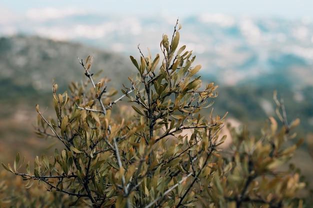 Zakończenie Gałąź Z Zielonymi Liśćmi Darmowe Zdjęcia