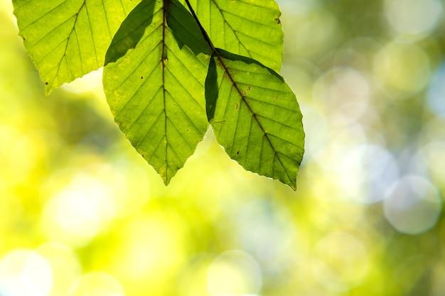 Zakończenie Jaskrawy Wibrujący Kolor żółty Up Opuszcza Na Gałąź W Jesień Parku. Szczegół Spadku Lasu Ulistnienie. Premium Zdjęcia