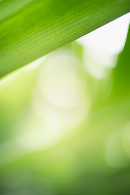 Zakończenie Natura Widoku Zieleni Liść Na Zamazanym Zieleni Tle Pod światłem Słonecznym Z Bokeh Up I Kopii Astronautyczny Używać Jako Tło Naturalnych Roślin Krajobraz Premium Zdjęcia
