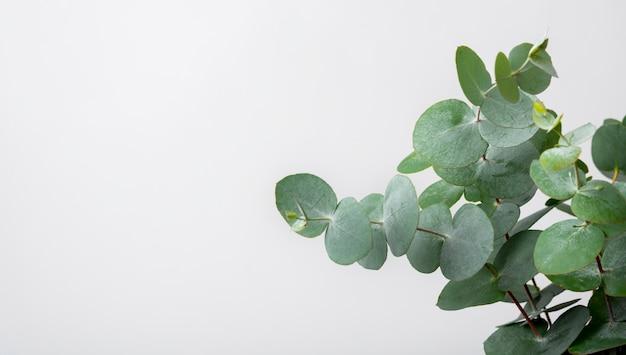 Zakończenie środowiskowa Roślina Z Kopii Przestrzenią Premium Zdjęcia