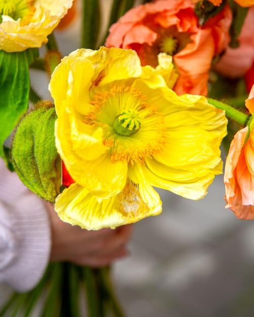 Zakończenie W Górę Widoku żółty Anemon Kwitnie Bukiet Darmowe Zdjęcia