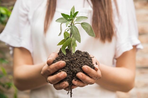 Zakończenie żeńska ogrodniczki ręka trzyma rozsady Darmowe Zdjęcia