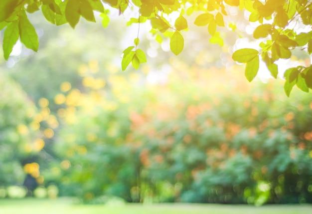 Zamazany Park Z Bokeh światłem, Natury Tło Premium Zdjęcia