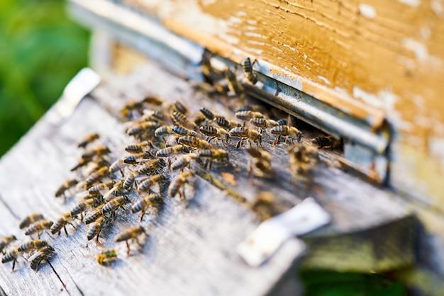 Zamknij Się Widok Pszczół Pracujących Na Plaster Miodu Ze Słodkim Miodem. Miód Jest Zdrowym Produktem Pszczelarskim. Premium Zdjęcia