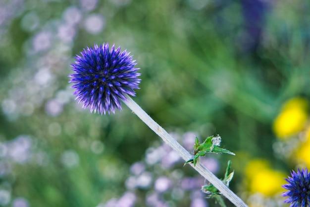Zamyka Strzał Purpurowa Roślina Z Zamazanym Darmowe Zdjęcia