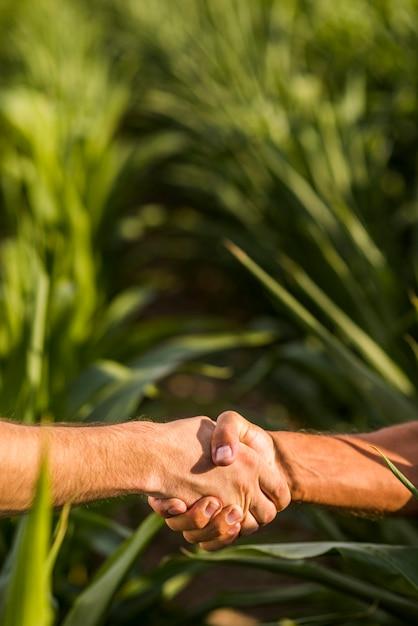 Zamyka up mężczyzna uścisku dłoni słonecznego dzień Darmowe Zdjęcia