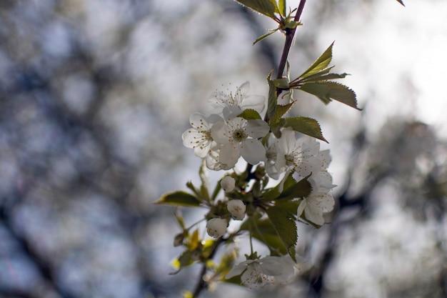 Zamyka Up Piękni Biali Kwiaty Z Zamazanym Naturalnym Tłem Darmowe Zdjęcia