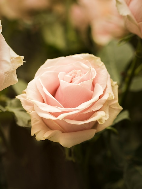 Zamyka up piękny ślubu kwiat Darmowe Zdjęcia