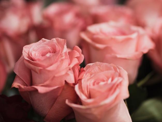 Zamyka Up Romantyczne Róże Darmowe Zdjęcia