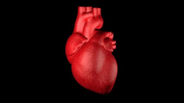 Zamyka W Górę Czerwonego Ludzkiego Serca 3d Odpłaca Się Premium Zdjęcia